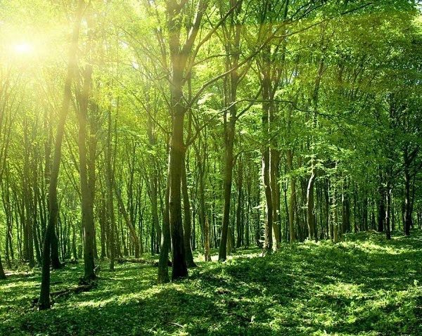 How to change a desert into a forest?